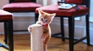 когтеточка для кошек своими руками фото пошагово как сделать
