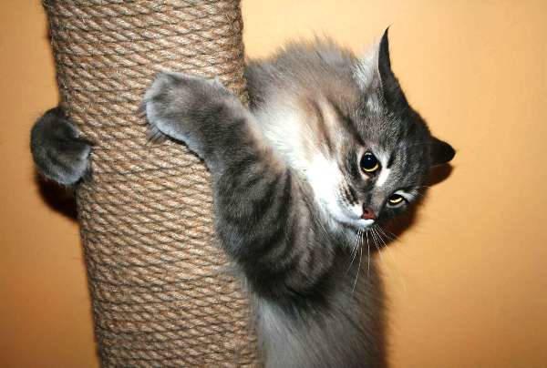 точилка когтей для кошек своими руками