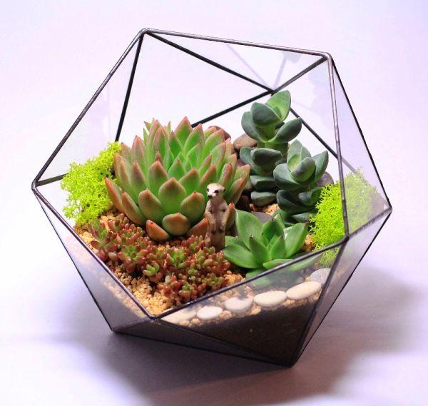 флорариум своими руками фото 12