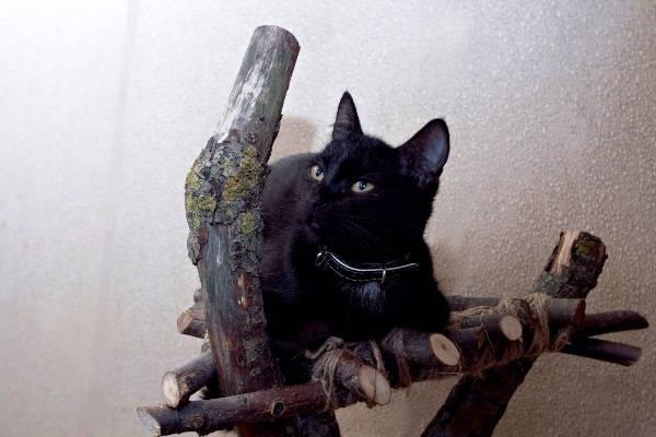 кошачья когтеточка своими руками
