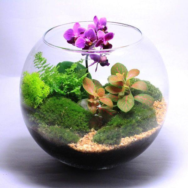 флорариум своими руками фото 8